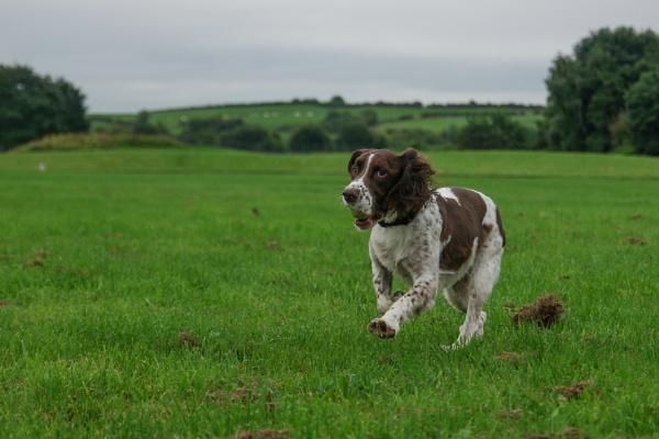 My Dog George