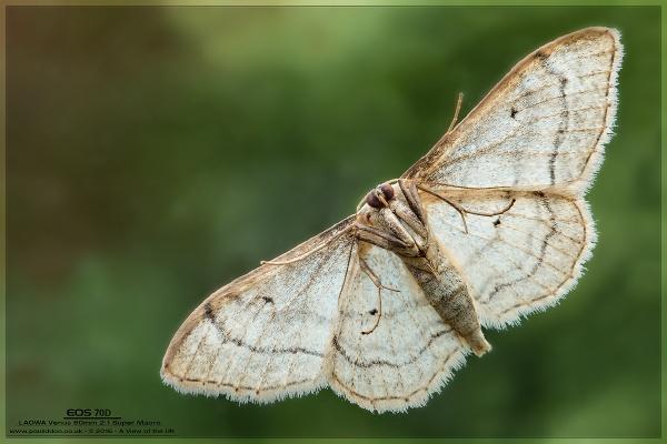 The Underside of a Moth by Paul_Iddon