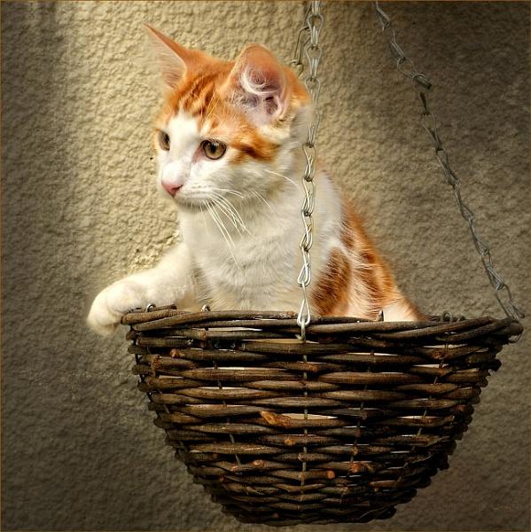 Basket Case by sweetpea62