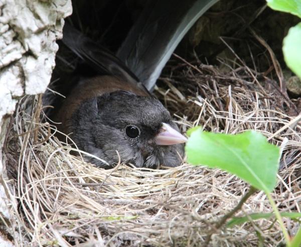 Nesting Jonco by DARATCLIFFE
