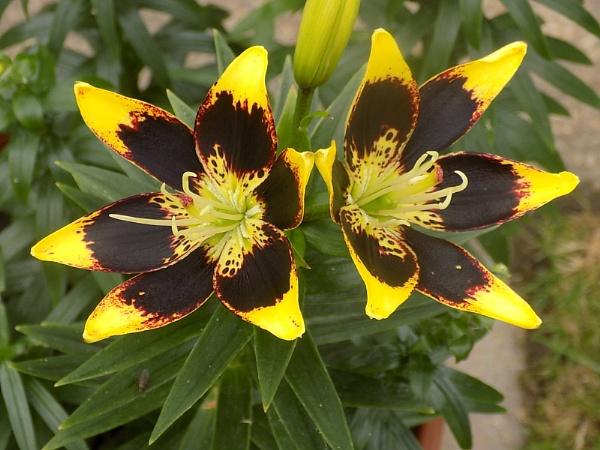 Flower from my garden by Captsaigon