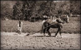 Ploughing in Majorca