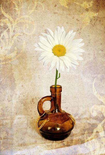 Daisy by Alda