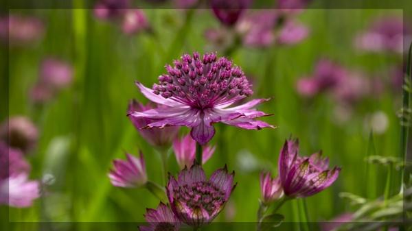 Floral Studies by boov