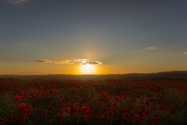 Poppy Field by windymills