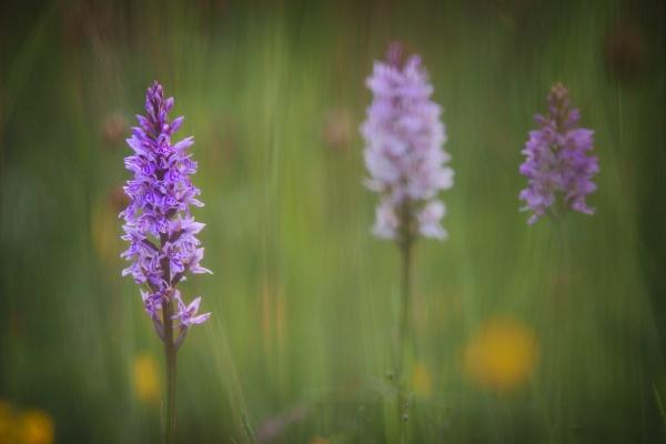 Lilac rythm by jarvasm