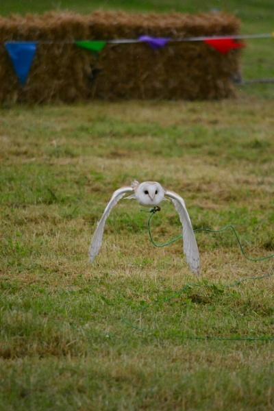 Owl in training by jimbob133