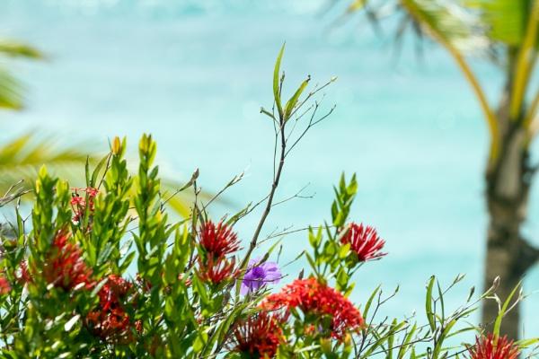Beach Flowers by Johnpt
