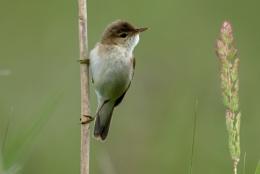 Unknown Bird.