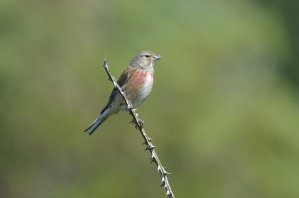 the bird by mark90d