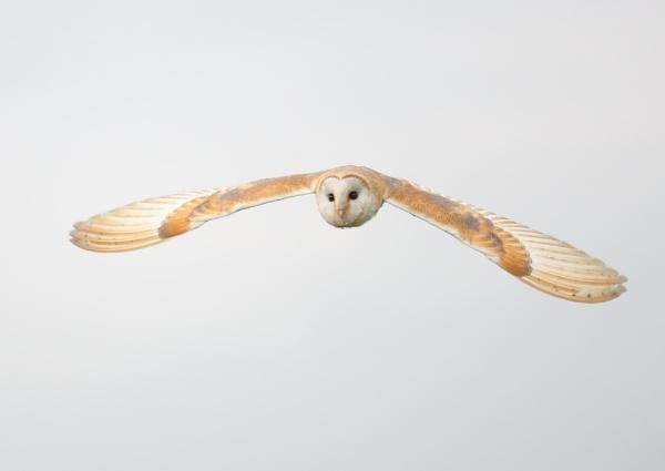 Bird of prey Centre Collection by NeilSchofield