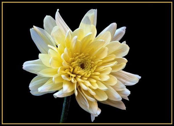 Flower by Stuart463