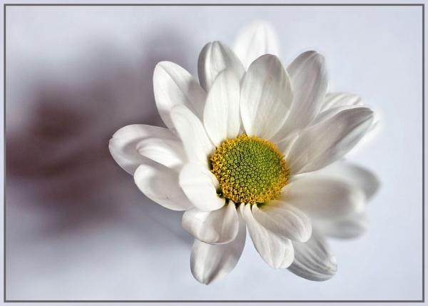 White by Stuart463