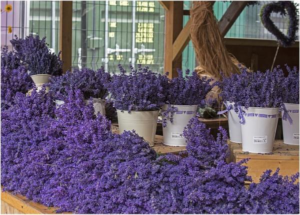 Lavender Sale by Lillian