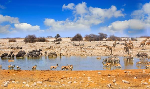 Vibrant waterhole in Etosha National Park by pf