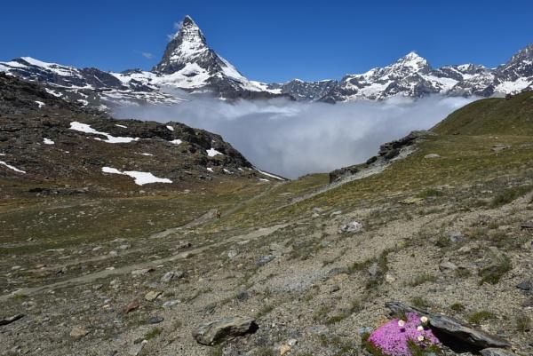 A splash of colour near the Matterhorn by smithgj