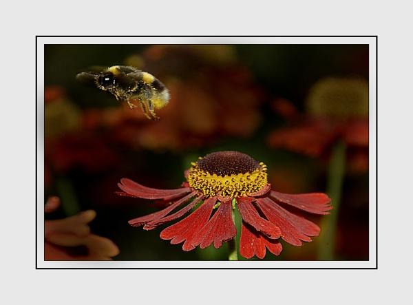 Flower & Bee by bigwheels