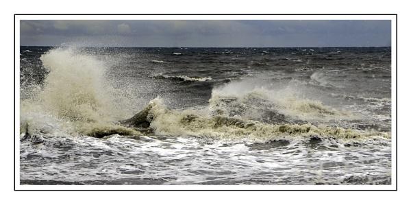 Sea Horses 2 by bigwheels