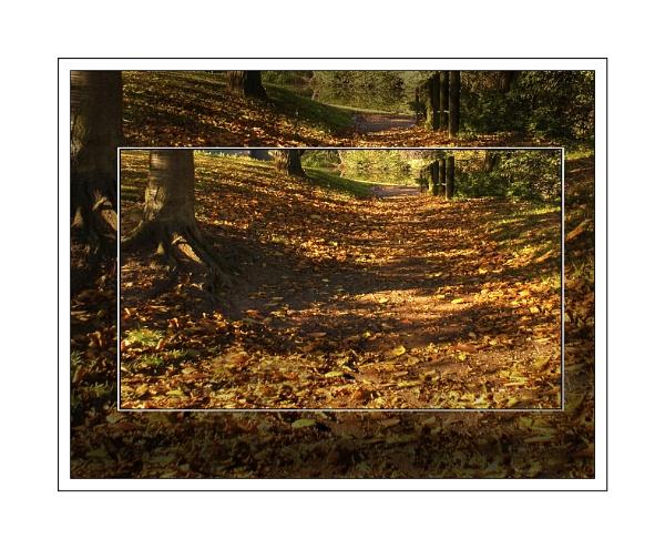 Autumn Gold by bigwheels