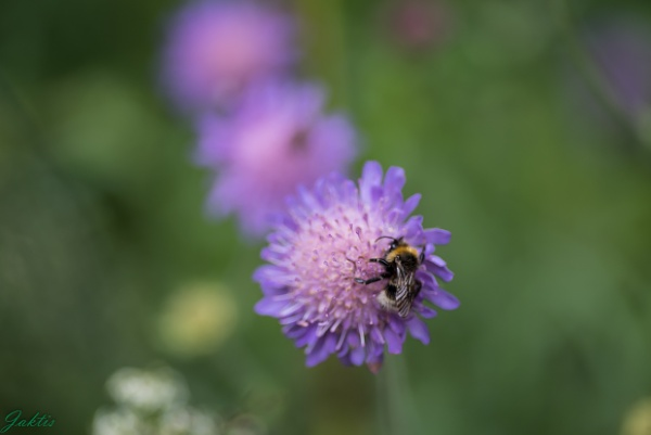 Birds and bees by jaktis