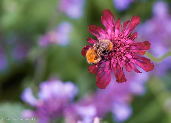 gotcha bumblebee by phonocar