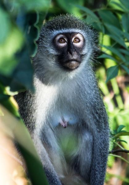 Sad looking monkey by Lainey39