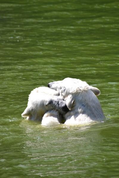 Bear Hug by TheBee