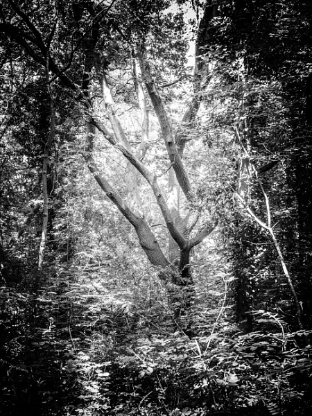 A walk in the woods by davidb