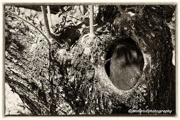 Old, Pruned Olive Tree Detail - Skala, Kefalonia, Greece. (Monochrome) by JohnI