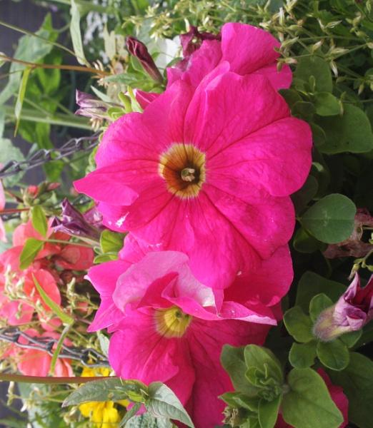 Bunch of Flowers by ddolfelin