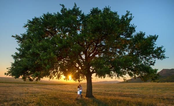 young couple under old oak by tutye