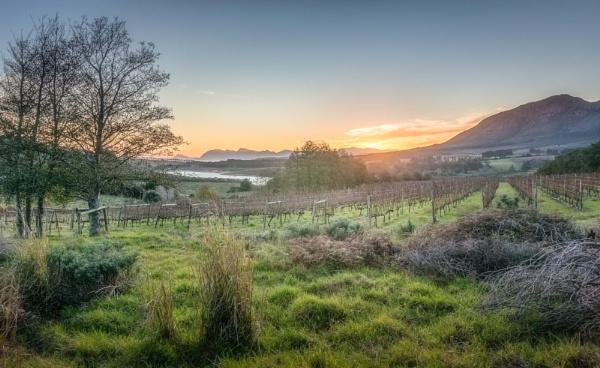 Sundown on the Hemel-en-Aarde ridge... by cimic