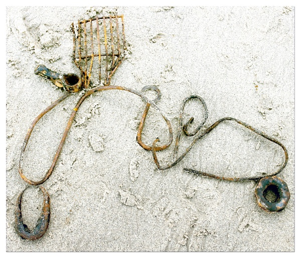 Beach creatures by helenlinda