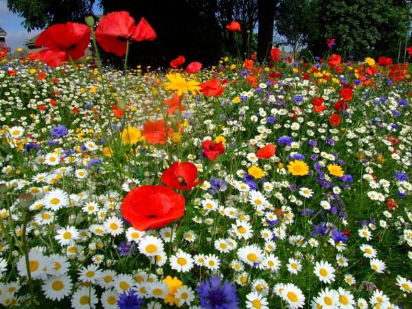 wild flowers by sandy22