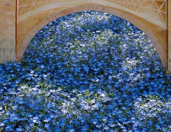 Display of Blue Flowers in East Grinstead by Phil_Bird