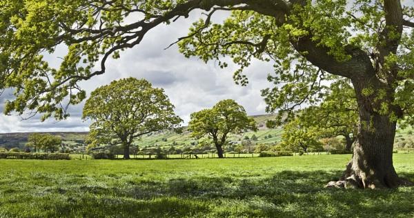 Summer Oaks by YorkshireSam