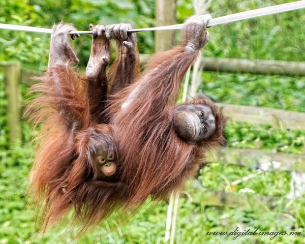 Hang on Tight... by Alan_Baseley