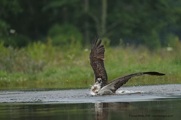 Splash Landing by Louise_Morris