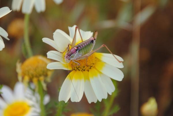 Flowers & Bugs... by Chinga
