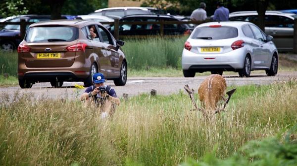 deer stalker by tpfkapm