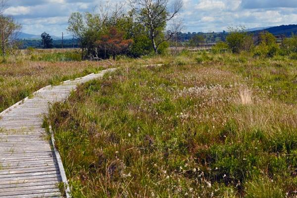 Foulshaw Moss by Drighlynne