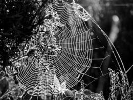 Into Charlotte's web