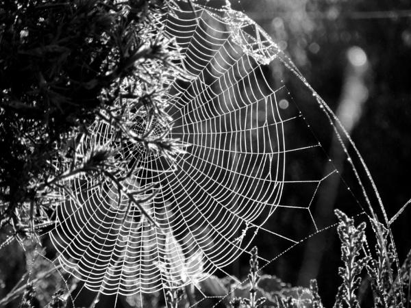 Into Charlotte\'s web by steve_i