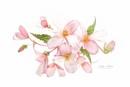 Summer Begonias by jackyp