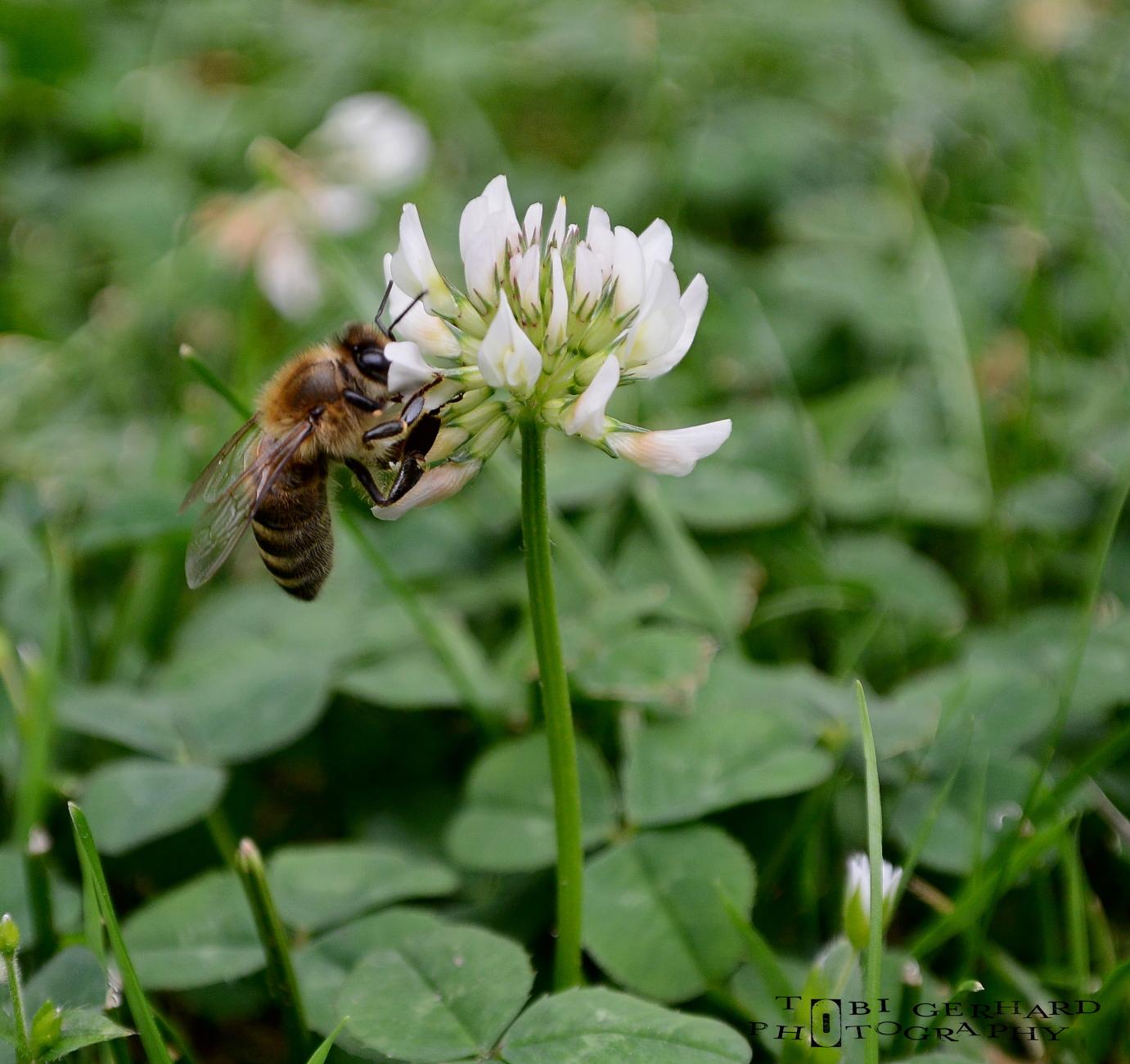 Bee me