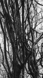 Woods (July) 3 - mono