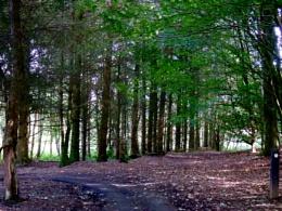 Woods (July) 2