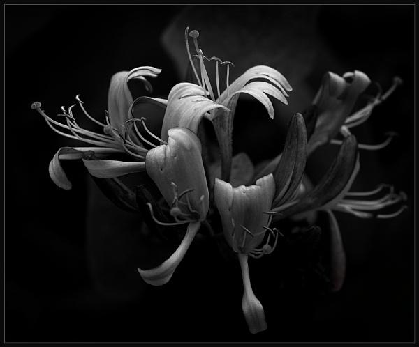 Dark Honey by Morpyre