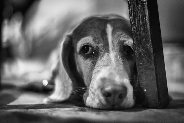 Dog Tired by ksag
