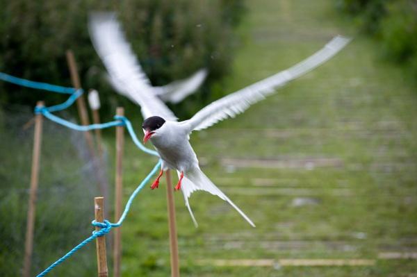 look at that bird by Owen05